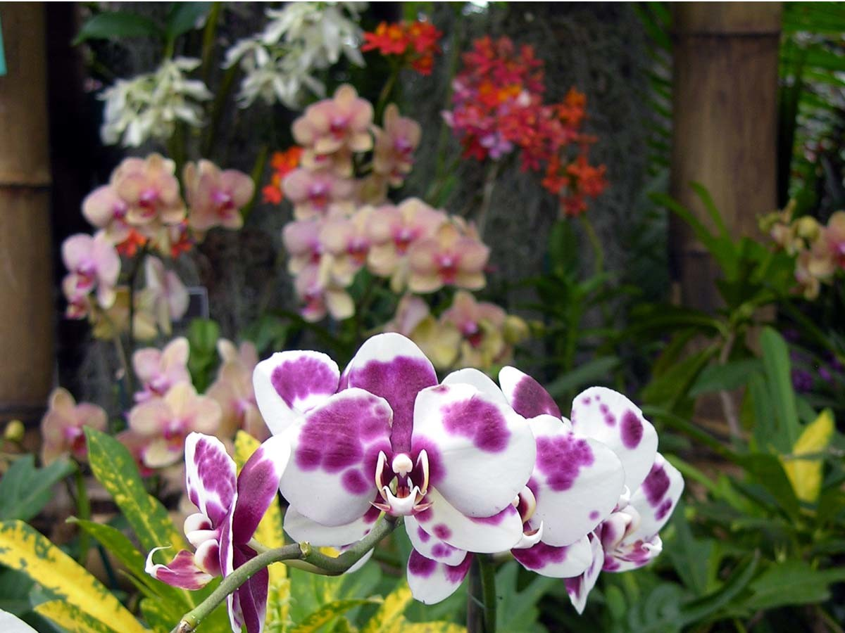 Avoid repotting an orchid when it is in bud or bloom
