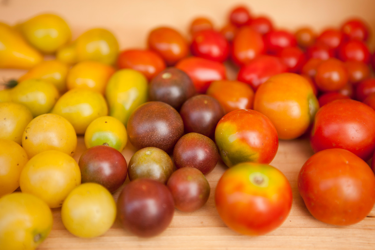 Yellow, purple and red tomatoes; photo by Ivo Vermeulen