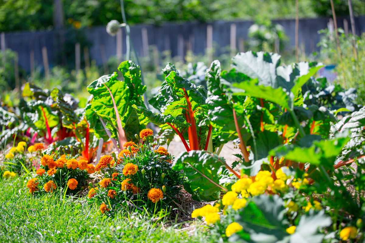 Color harmony in a vegetable garden; photo by Marlon Co