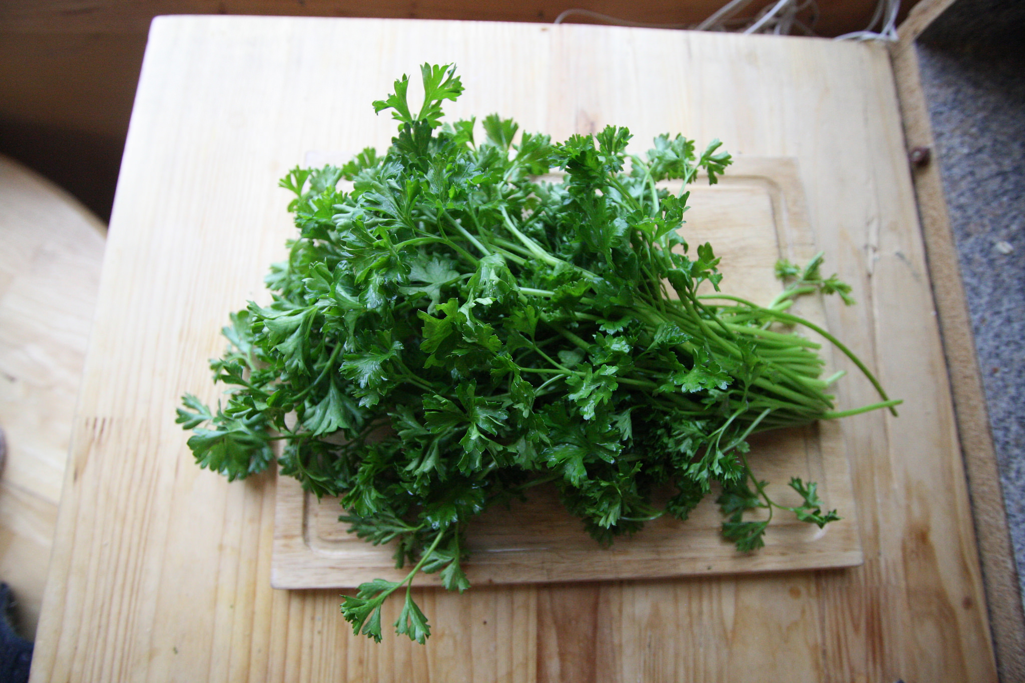 Flat leaf parsley is considered more flavorful for use in cooking; photo courtesy of Flickr cc/Wheeler Cowperthwaite