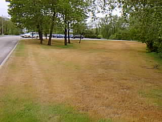 This is a photo of the first prairie restoration site on Alverno's campus prior to prairie creation. In the foreground is brown dormant grass and in the background are parked cars.