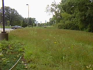 Here is a view of Alverno's first prairies restoration site in September 2000. There are green grasses and plants in the foreground and a parked car in the background.
