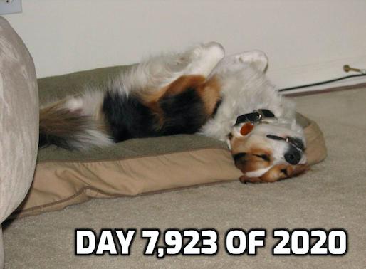 tired dog 2020