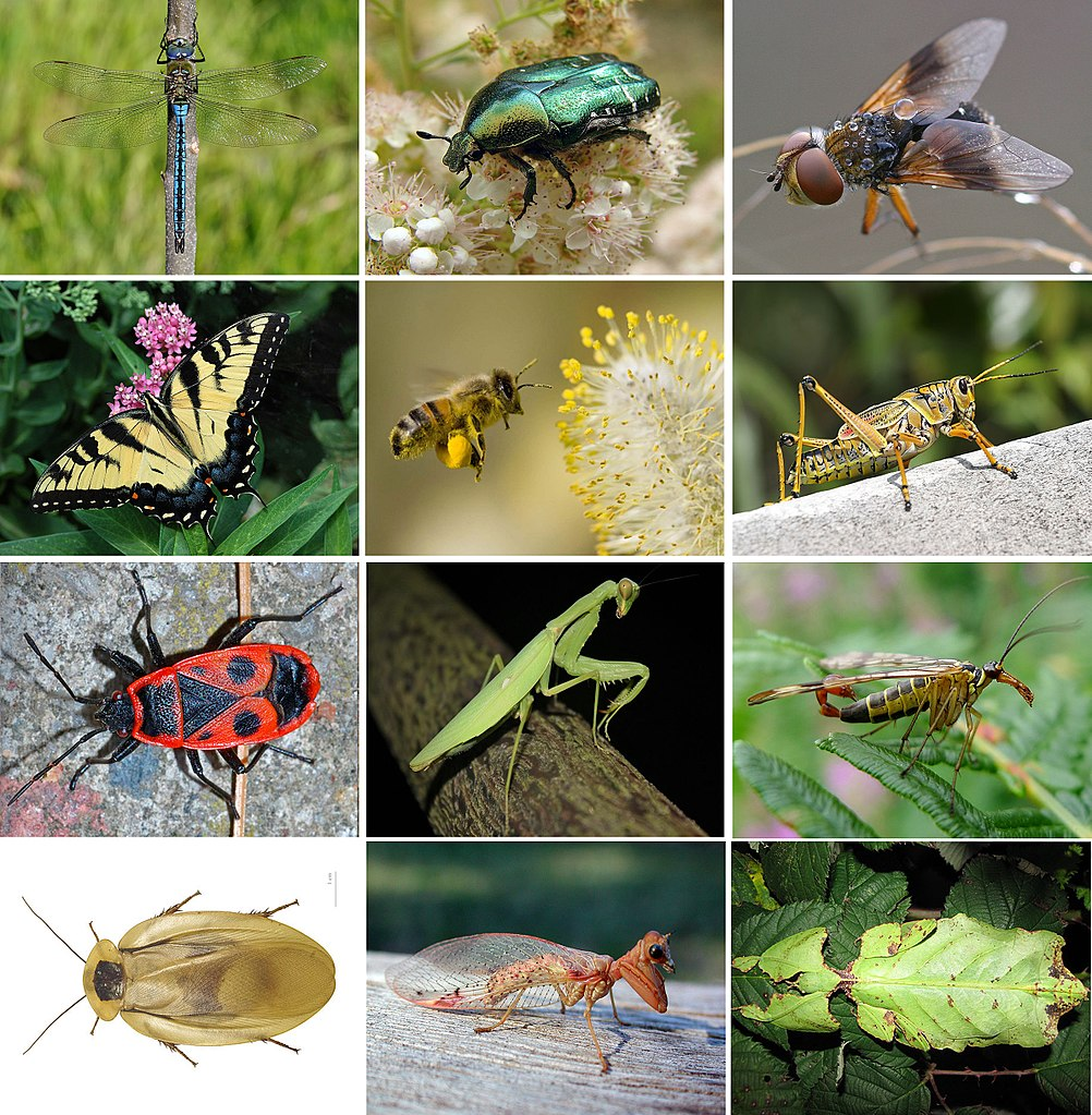 collage of insects and bugs