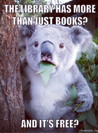 Koala with a leaf in its mouth and the words