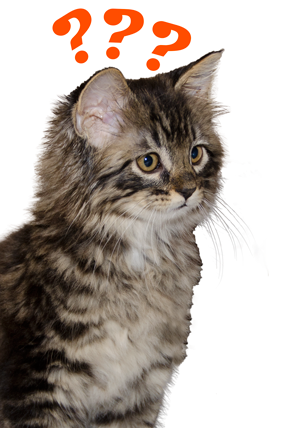 grey kitten with orange question marks over its head