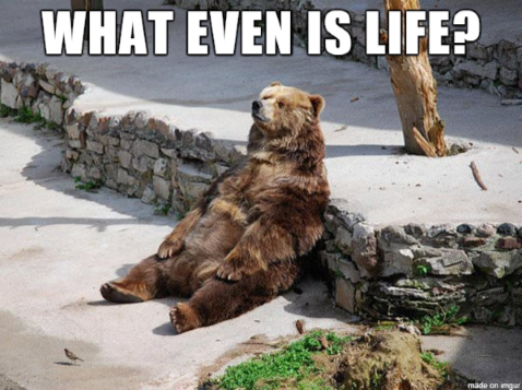 Brown bear sitting down and leaning against a wall in the sun with the words