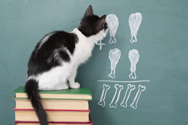 Picture of a black and white cat sitting on a pile of books looking at a chalkboard math problem made of drawings of fish and bones.