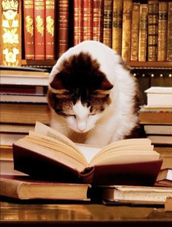 Black and white cat reading an open book on a table with bookshelves in the background.