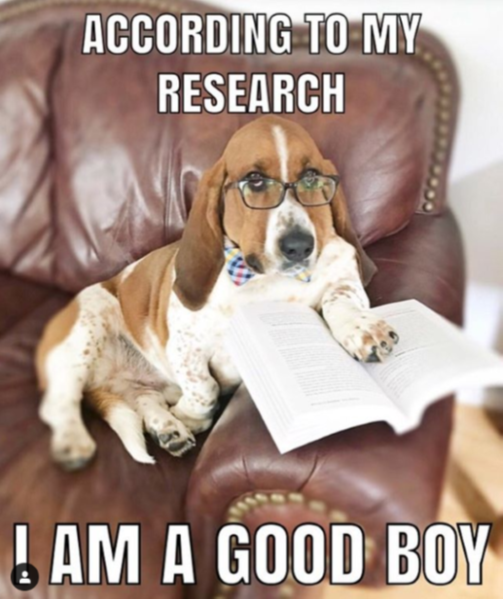 Basset hound wearing glasses sitting in a chair holding with its paw on an open book and the words