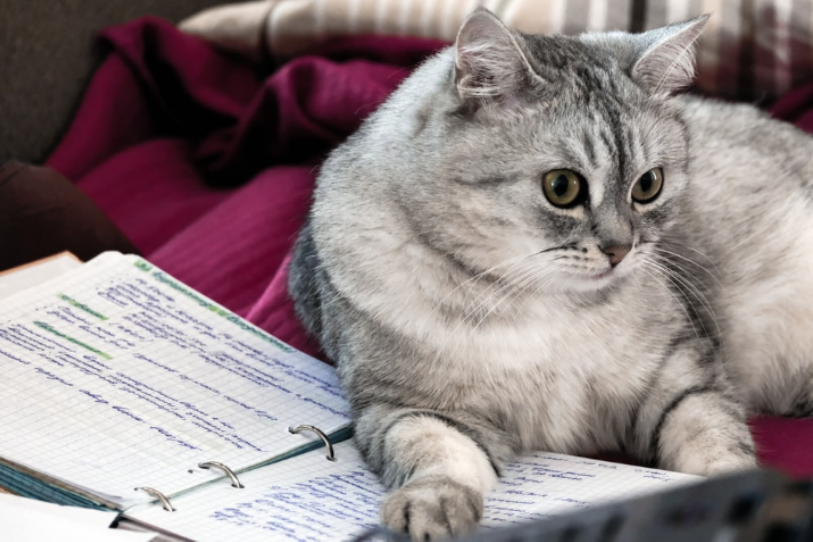 Grey and white tabby cat lounging on an open binder notebook.