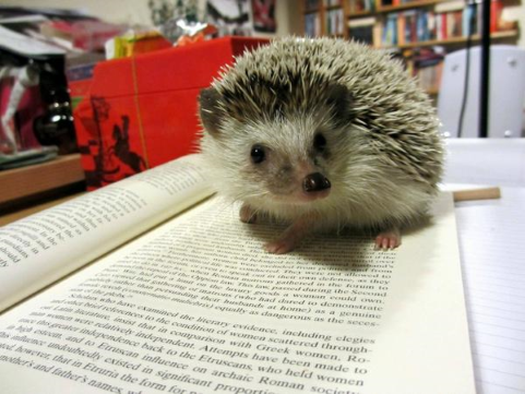 Hedgehog on an open book