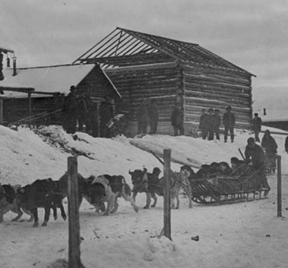 Dog sled arriving from Iditarod