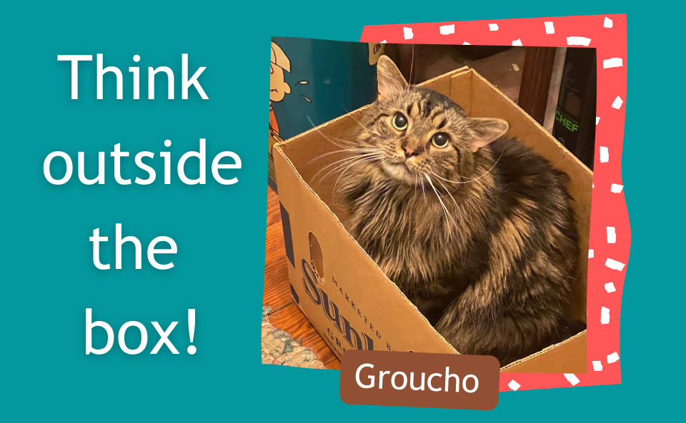Think Outside the Box! Photo of a cat named Groucho sitting in a cardboard box