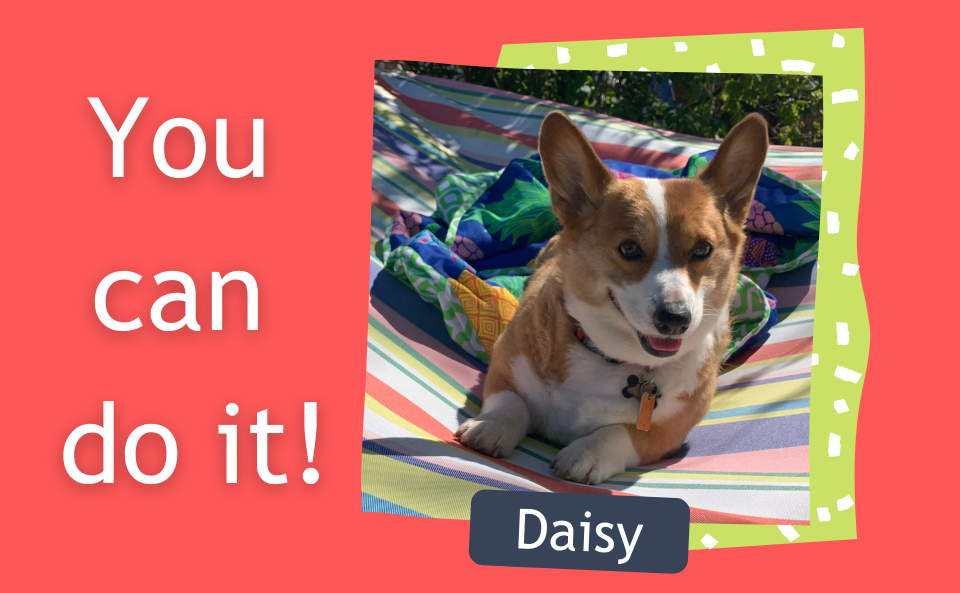 You can do it! Photo of a Corgi named Daisy sitting on a multicolor stripped hammock.