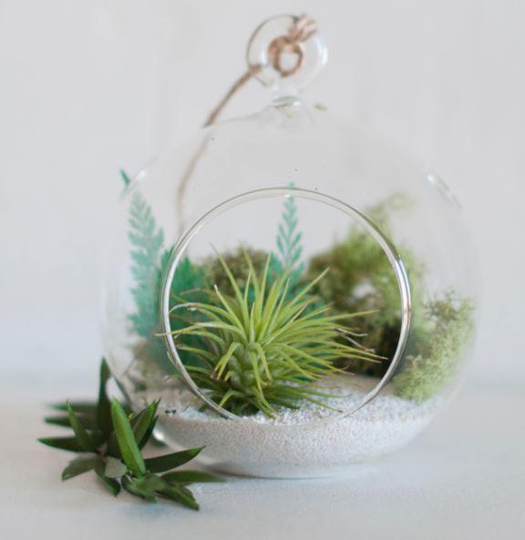 Create an air plant terrarium