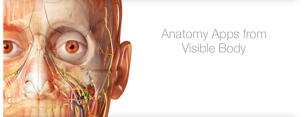 Anatomy Apps from Visible Body (Image of head with no skin)