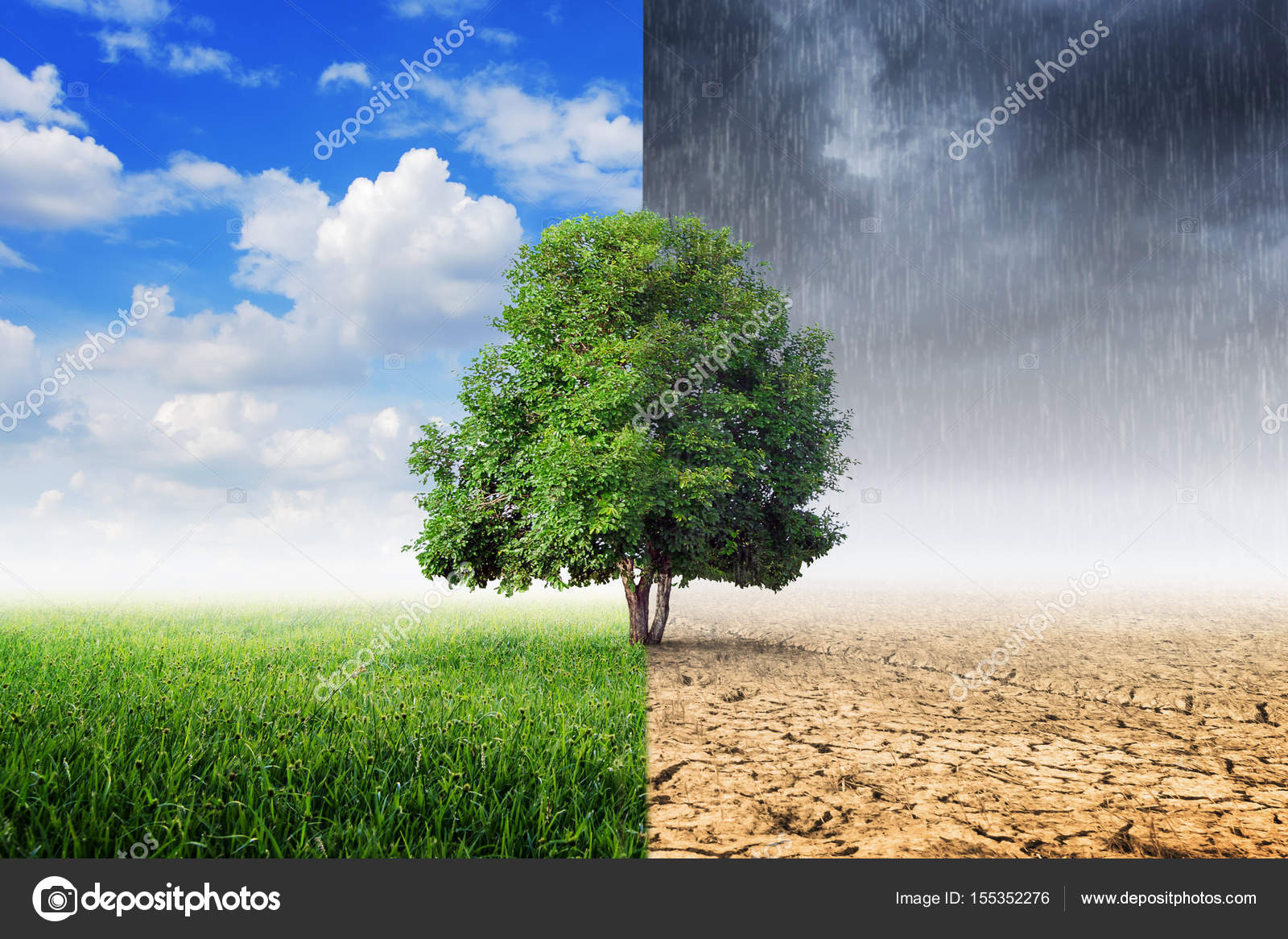 tree in the middle of four quadrants showing different climate changes
