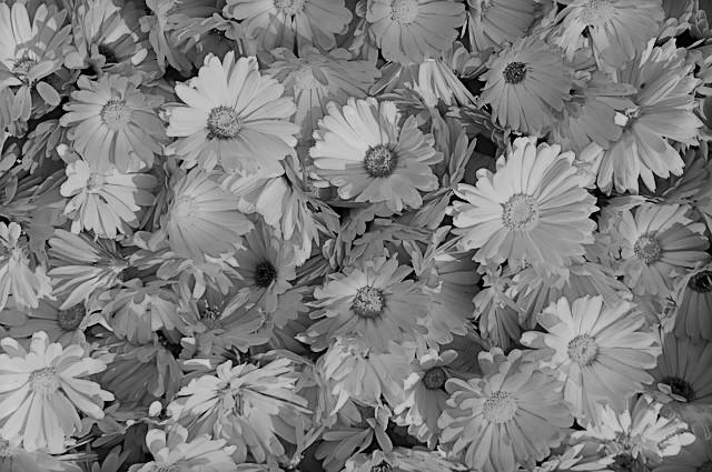 Flores para los Muertos (Flowers for the Dead)