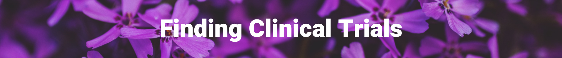 """The text """"Finding Clinical Trials"""" in white on a purple flower background."""