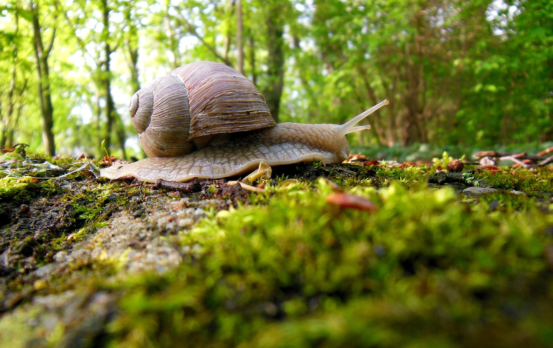 macro photo of snail moving across forest floor