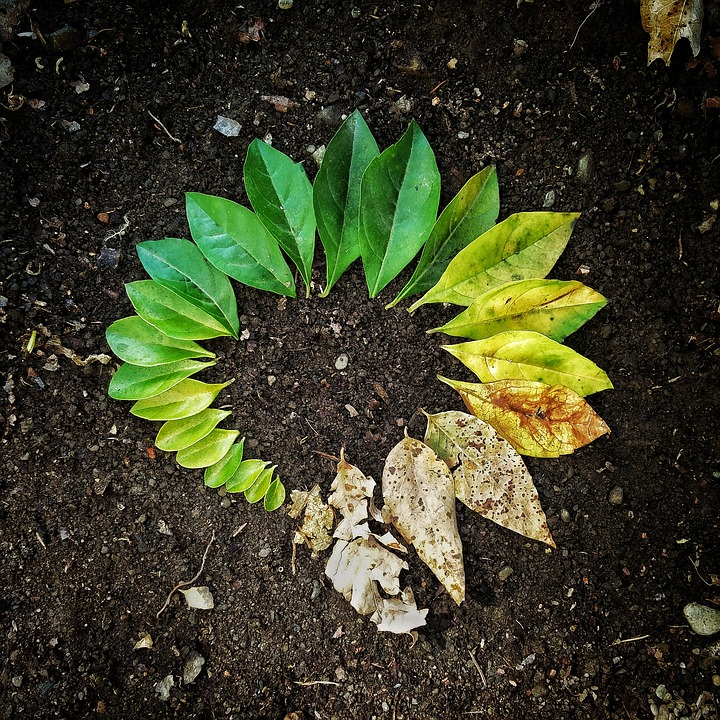 Leaves arranged in a circle representing brith to death by the size and deterioration of the leaves