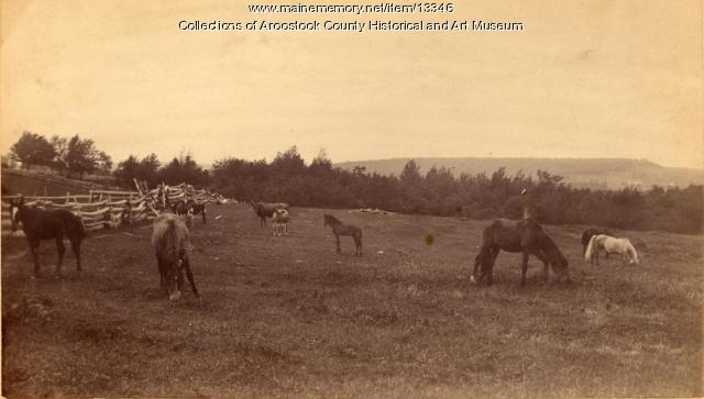 Horses and livestock grazing on farmland with pine forest in background.