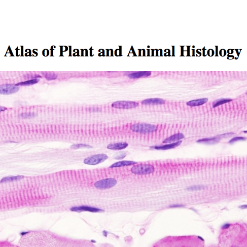 Atlas of Plant and Animal Histology