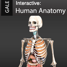 Gale Interactive: Human Anatomy