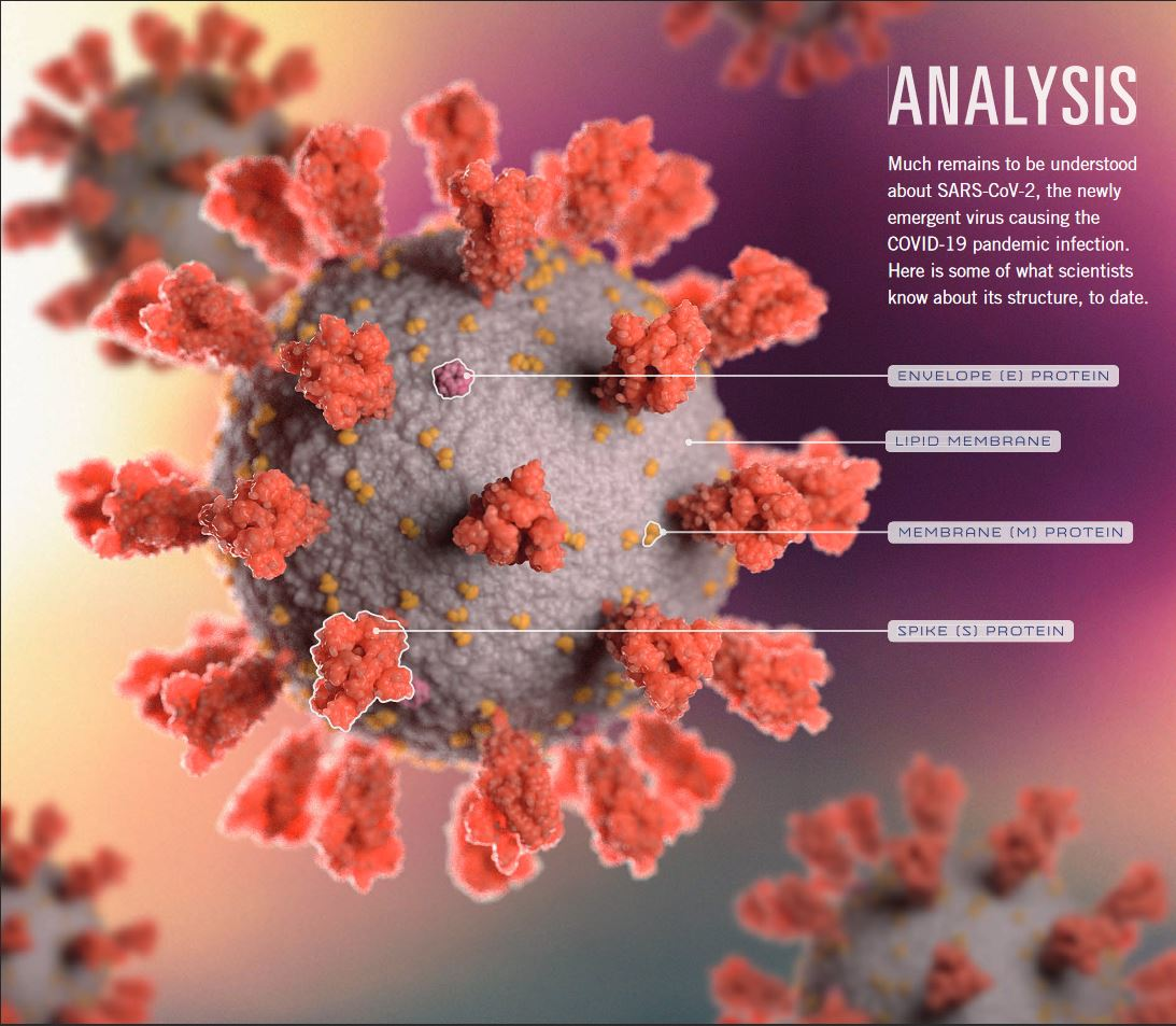 SALK Corona Virus InfoGraphic portion
