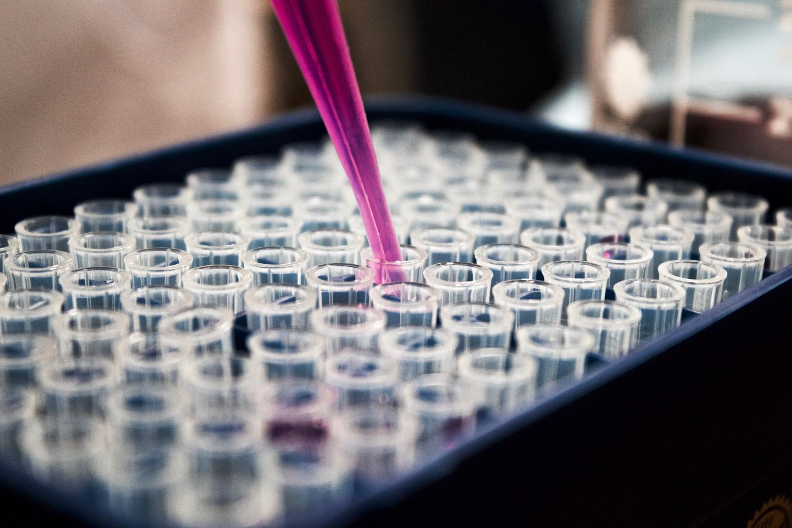 A pipette putting pink liquid in one of many test tubes