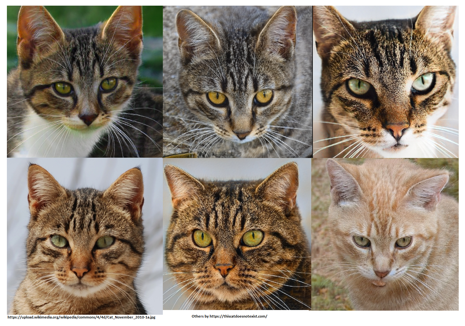 5 fake cats one real in lower left hand corner