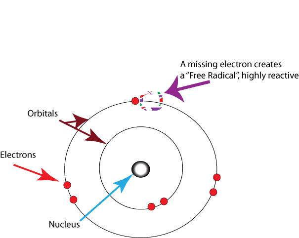 "Nucleus (circle) inside of two concentric circles called prbotals. There are two pairs of electrons on the outer orbital, and a single electron. A single electron creates a highly reactive ""free radical."""