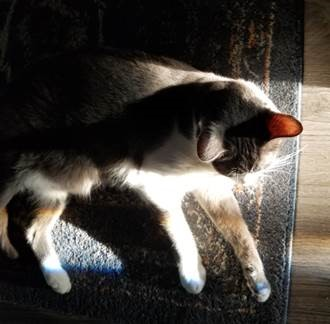 Cat sitting in a ray of light with hints of a rainbow on his paws.