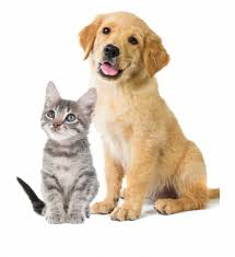 Virtual: Teen pet pictures