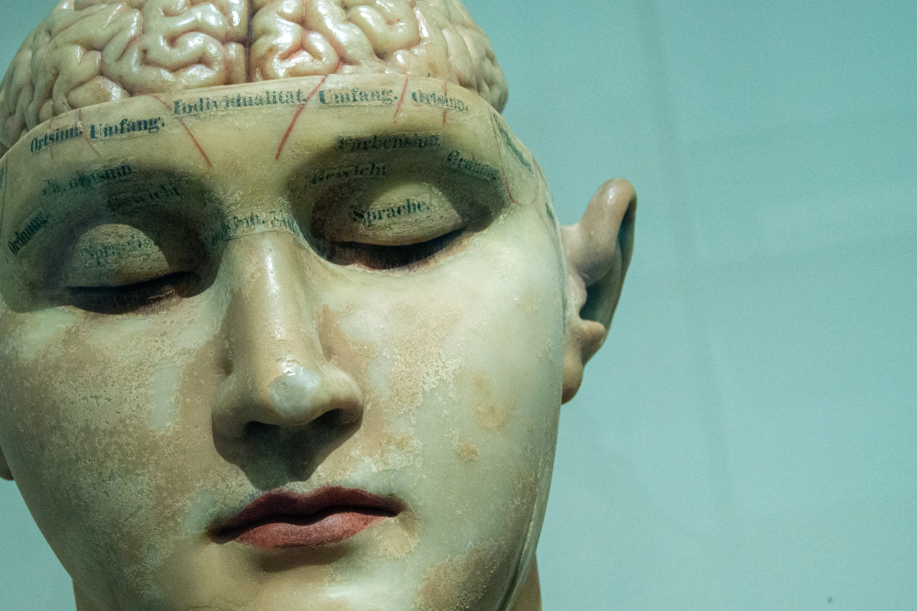 sculpture of a human head with the brain showing on top