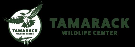 Get Wild with Wildlife
