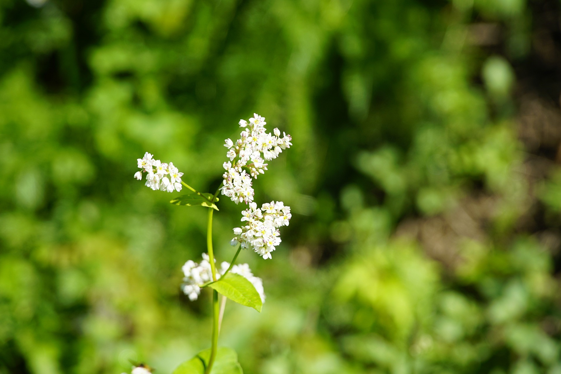 What is a Weed: Nature Walk