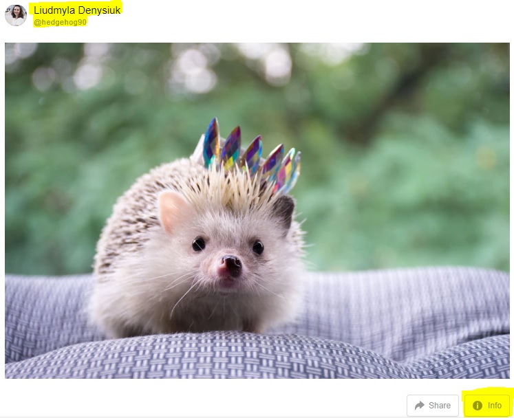 Picture of a hedgehog wearing a crown