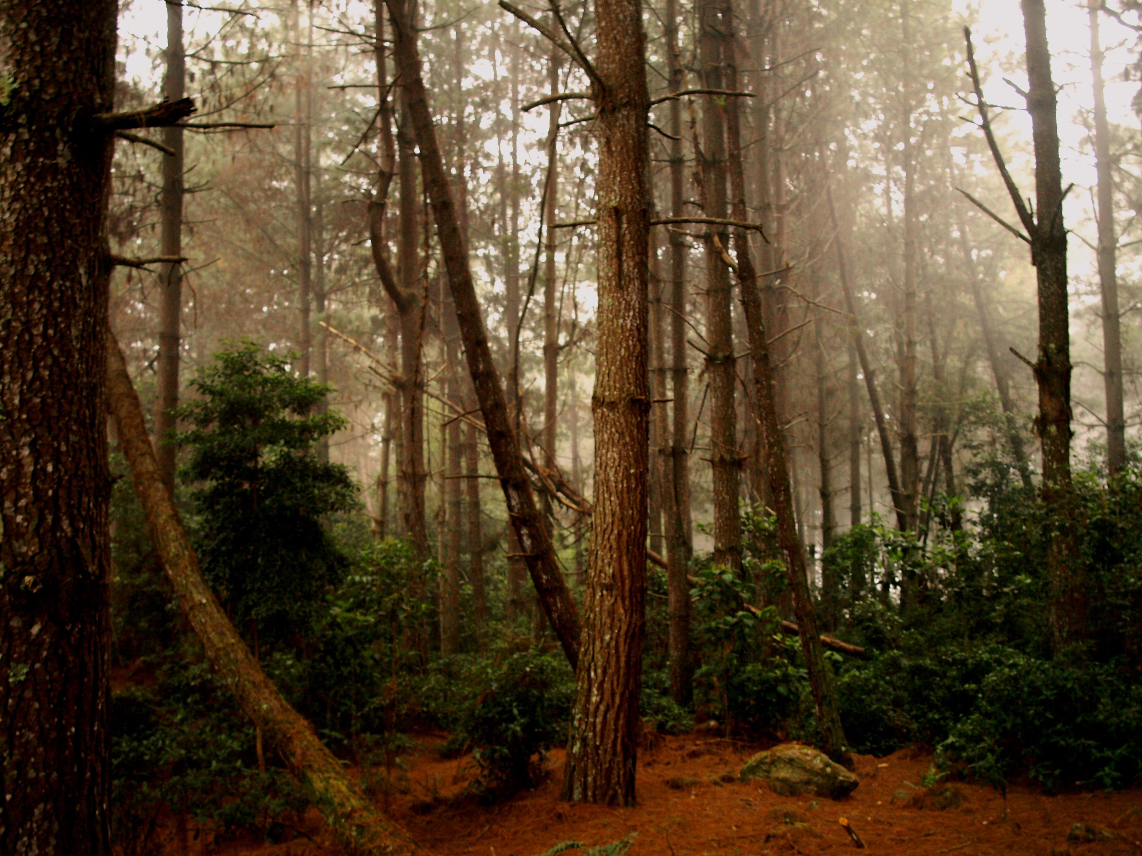 Bosque de El Valle, Mérida