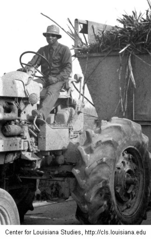 Black tractor driver, sugarcane harvest season, Allain Plantation, St. Mary Parish, November 1979. (Louisiana Digital Library)