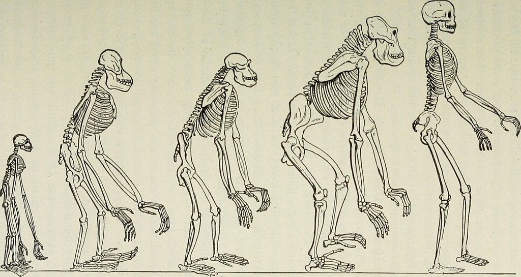 The evolution of man depicted in five stages in the evolution process.