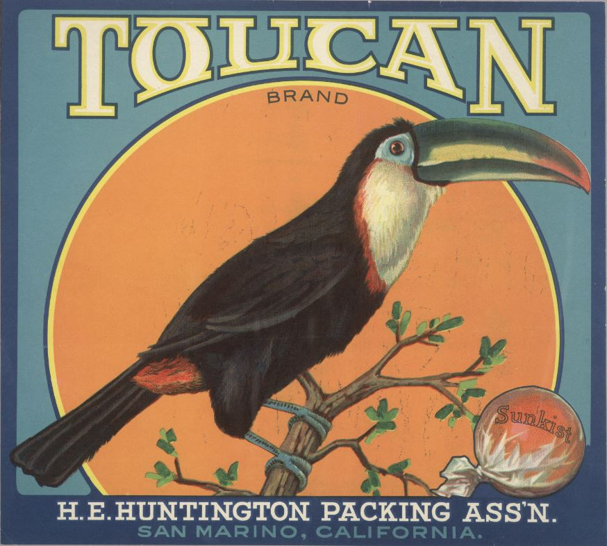 Toucan brand citrus label.