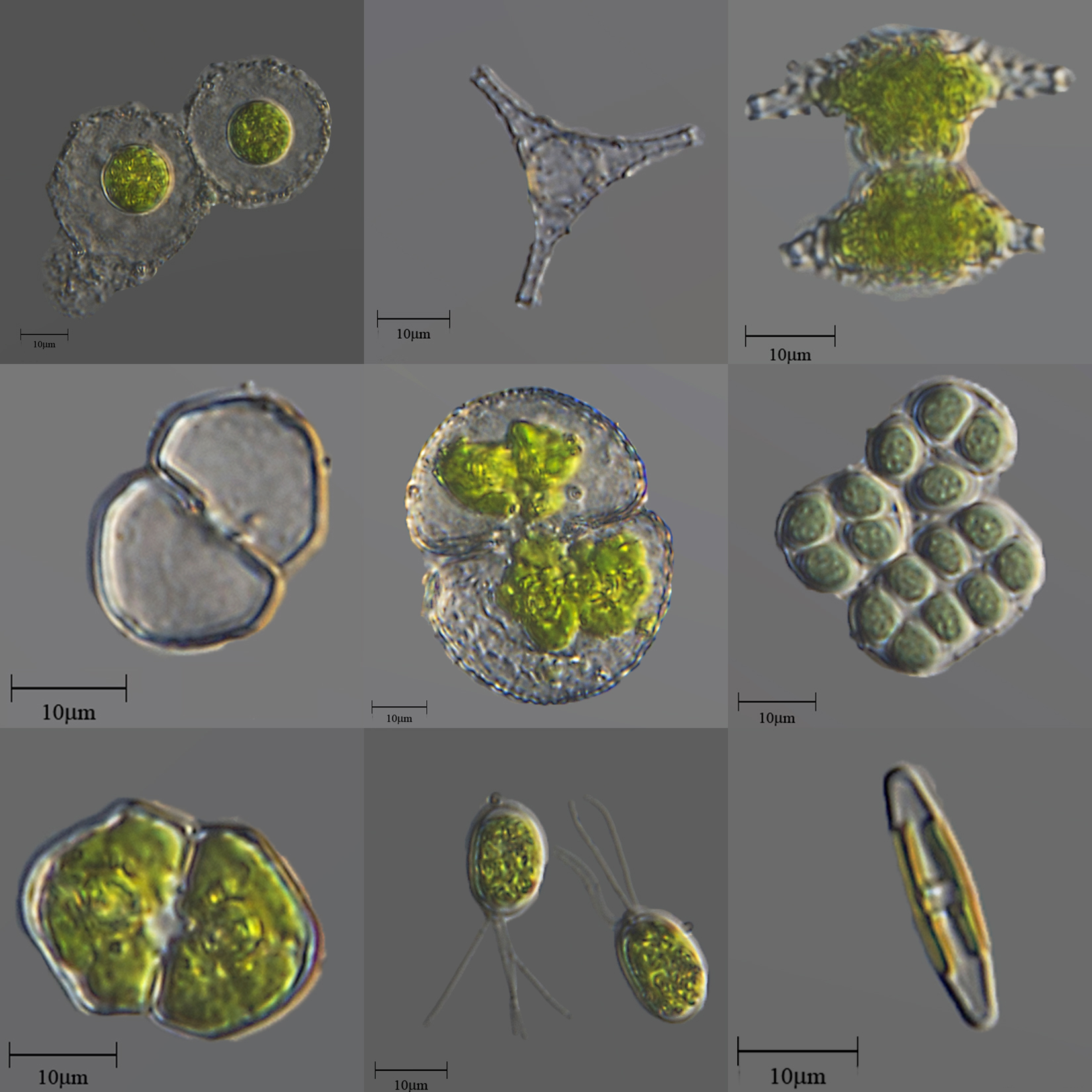 Images of microscopic organisms or cells.