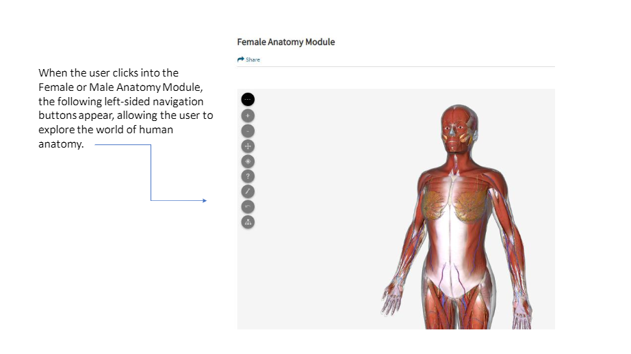 Guide to using AccessMedicine anatomy modules