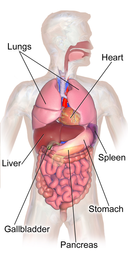image of human organs with labels