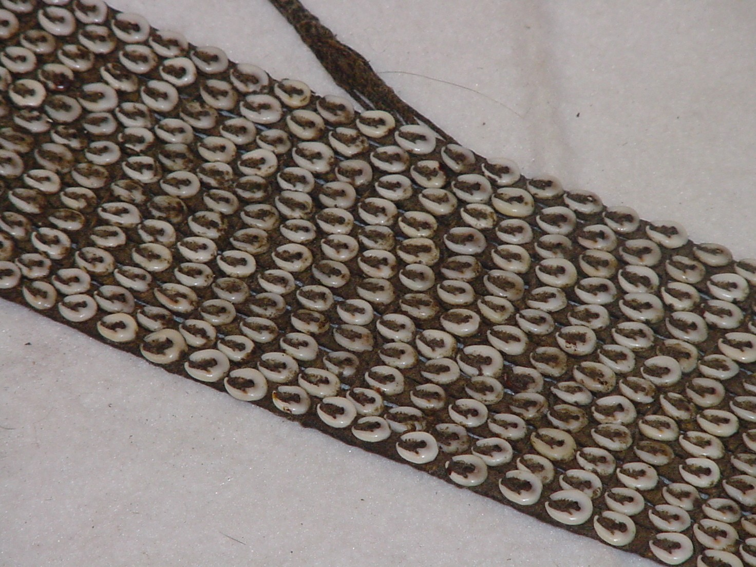 Cowire shell belt detail