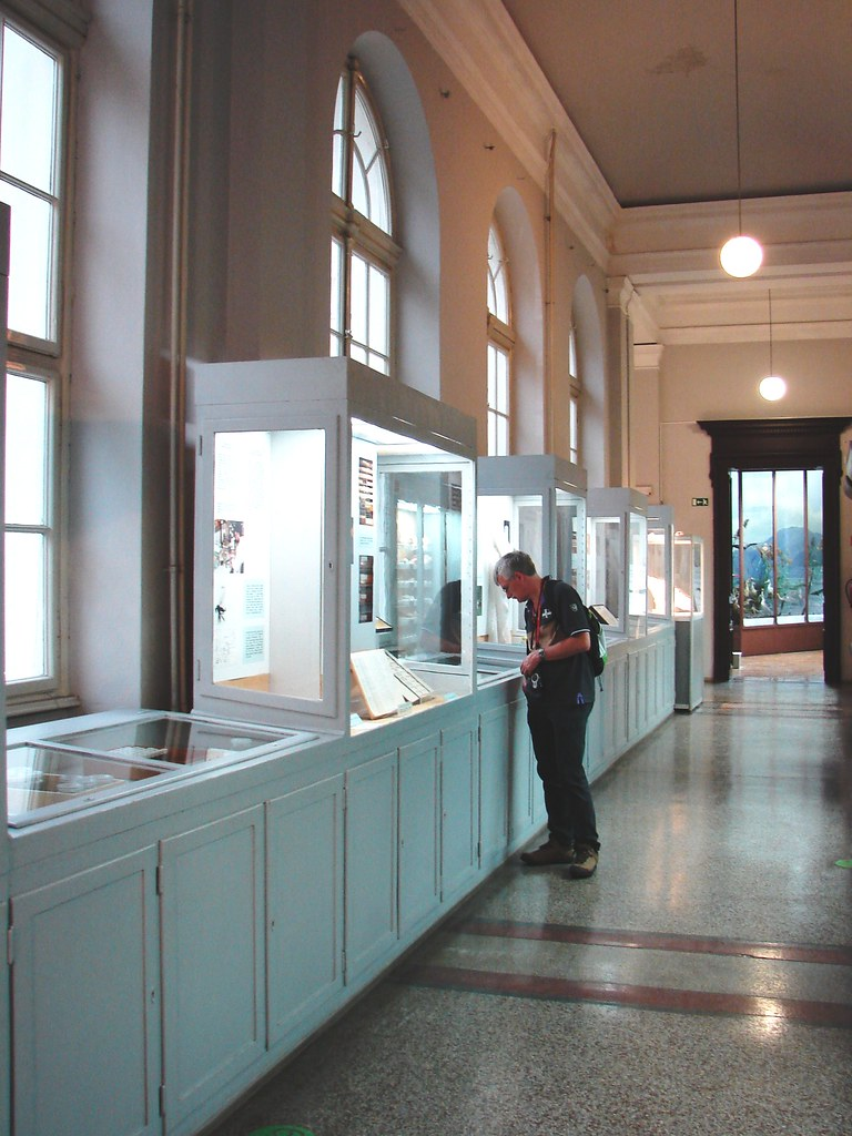 man looking into a museum vitrine