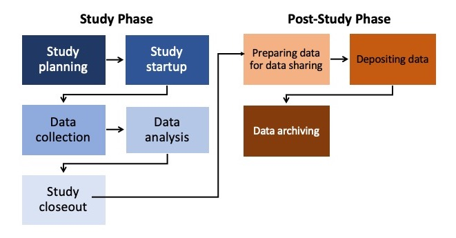 study lifecycle diagram showing transition from study phase (study planning, study startup, data collection, data analysis, study closeout) to post-study phase (preparing data for data sharing, depositing data, data archiving)