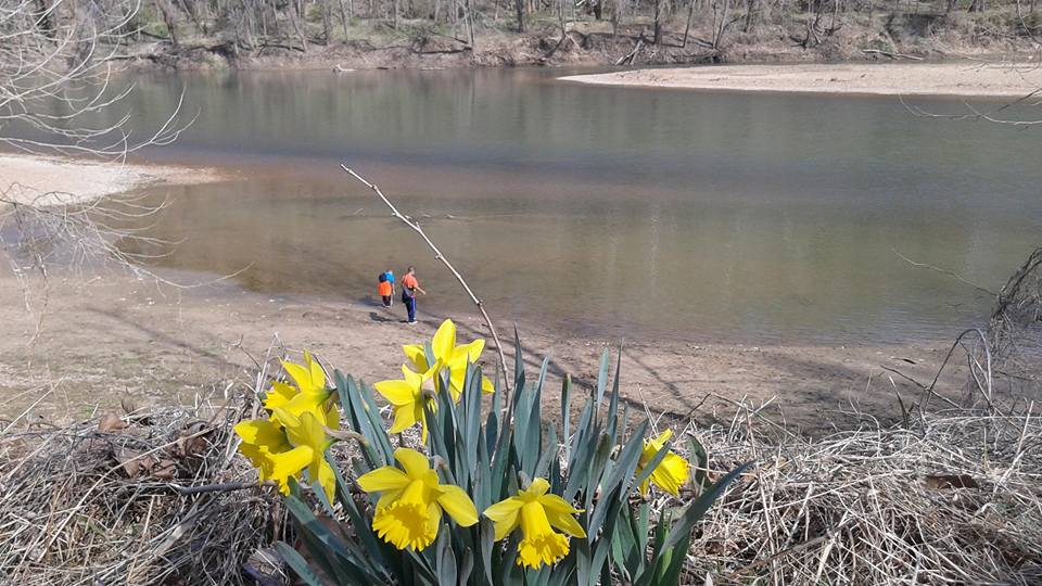 View of Meramec river with daffodils in foreground.